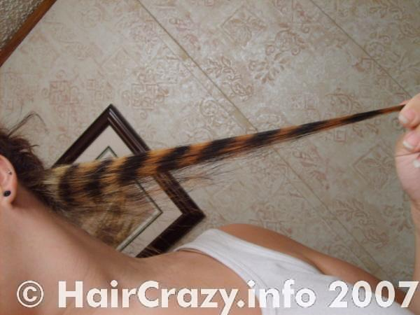 The finished coontail. Bleached and unbleached hair form stripes.